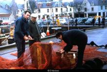 Herring on Stornoway Pier, 1960s <a href='/image-details/88995'>(more info)</a>