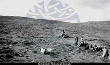 Sheepdog Trials <a href='/image-details/88903'>(more info)</a>