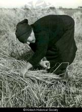 Harvesting in Laxay <a href='/image-details/87755'>(more info)</a>